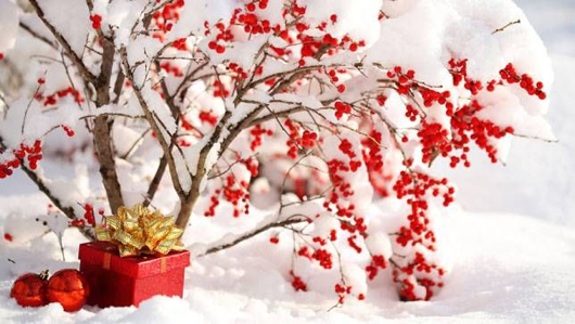 Native Plants That Make Great Holiday Decorations