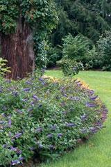 March-Planning-a-Garden